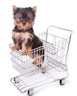 puppy shopping-491